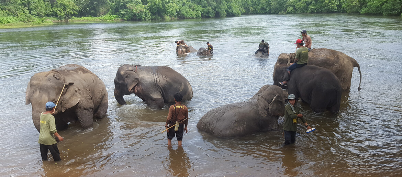 Swimming with elephants at Elephant World in Kanchanaburi in Thailand